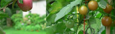 On kruiden eetbare bloemen wilde planten en 39 vergeten for Groenten tuin
